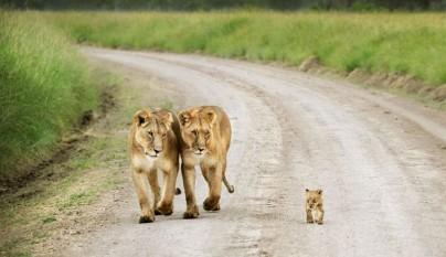 Fotos de animales con su familia2