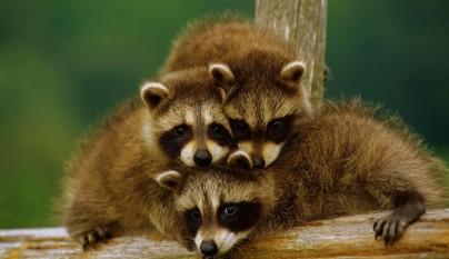 Fotos de animales con su familia21