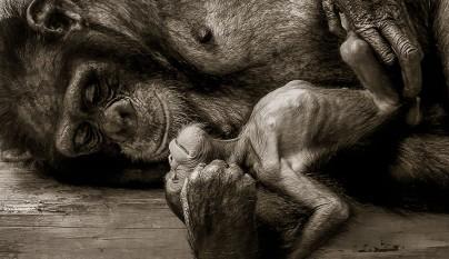 Fotos de animales con su familia22