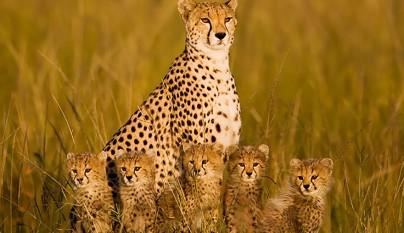 Fotos de animales con su familia3