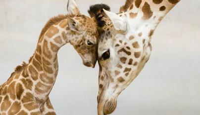 Fotos de animales con su familia5