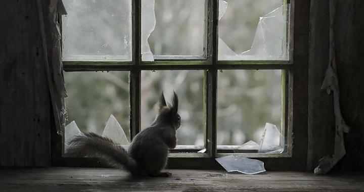 Fotos de animales mirando por la ventana