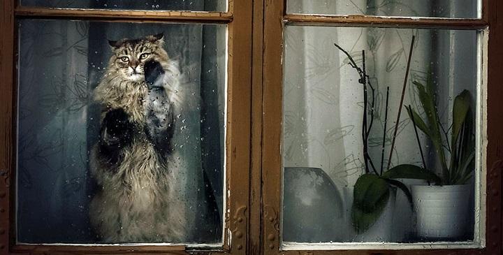 Fotos de animales mirando por la ventana1