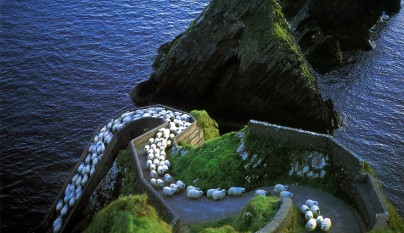 Fotos de ovejas en la naturaleza1