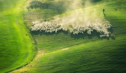 Fotos de ovejas en la naturaleza12