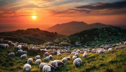 Fotos de ovejas en la naturaleza14