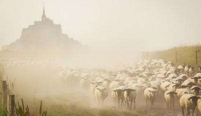 Fotos de ovejas en la naturaleza18