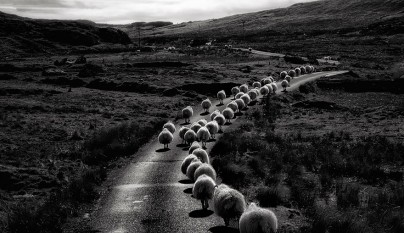 Fotos de ovejas en la naturaleza2