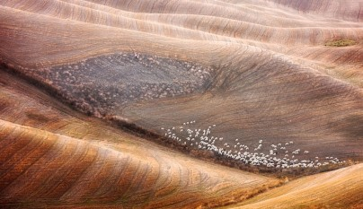 Fotos de ovejas en la naturaleza20