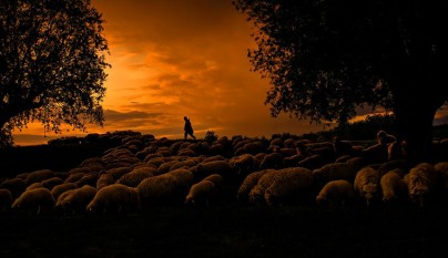 Fotos de ovejas en la naturaleza22