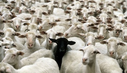 Fotos de ovejas en la naturaleza23