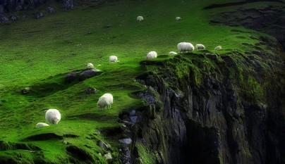 Fotos de ovejas en la naturaleza3