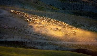 Fotos de ovejas en la naturaleza4