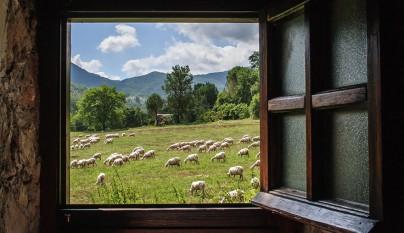 Fotos de ovejas en la naturaleza5