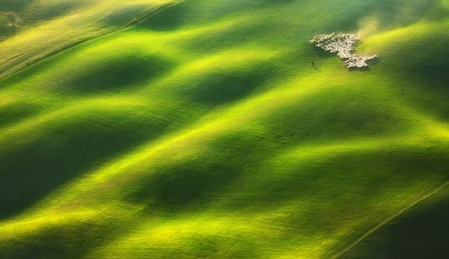 Fotos de ovejas en la naturaleza6