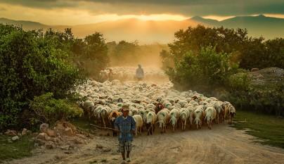 Fotos de ovejas en la naturaleza7