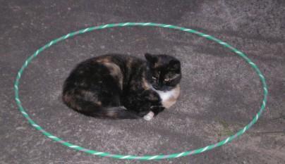 Gatos circulos12