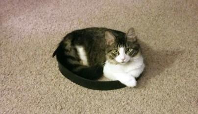 Gatos circulos14