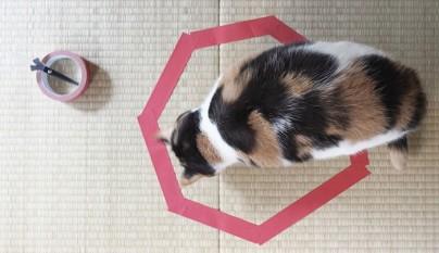 Gatos circulos2