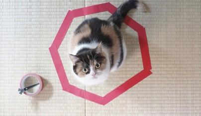 Gatos circulos3