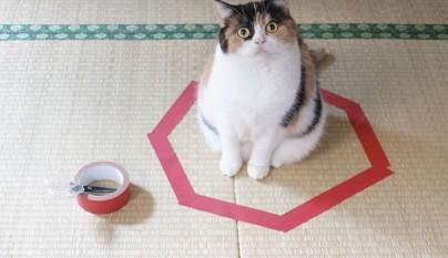 Gatos circulos4