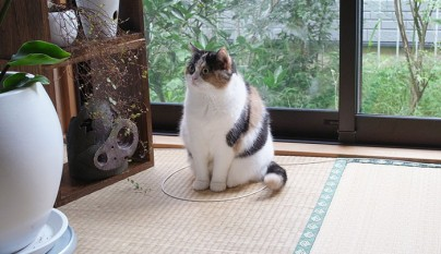 Gatos circulos9