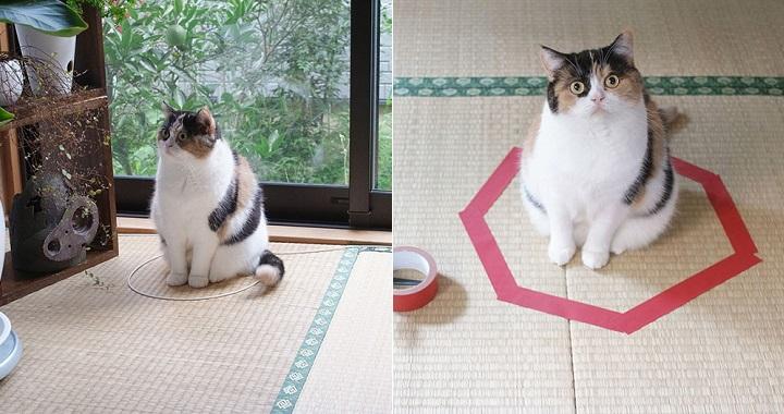 Gatos y circulos