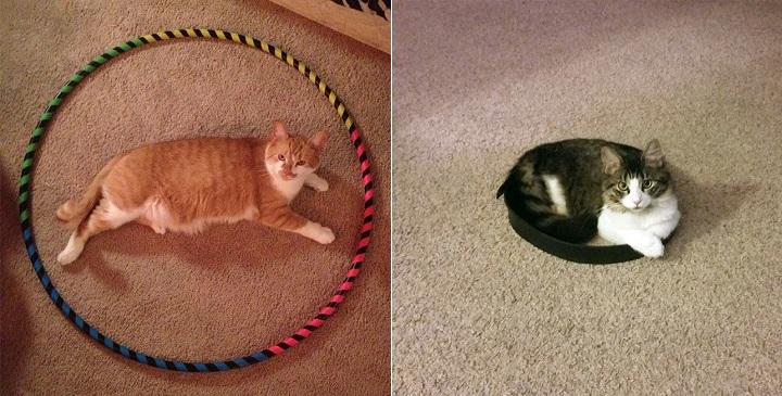 Gatos y circulos1