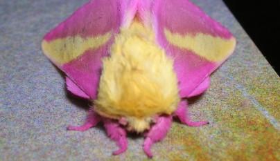 animales colores inesperados21