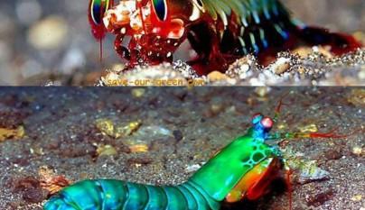 animales colores inesperados22