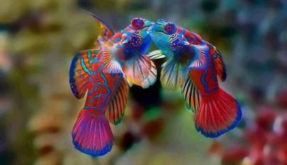 animales colores inesperados24