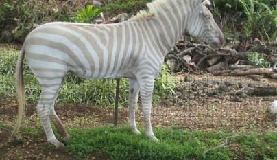 animales colores inesperados30