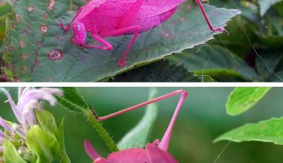 animales colores inesperados5