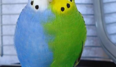 animales colores inesperados8