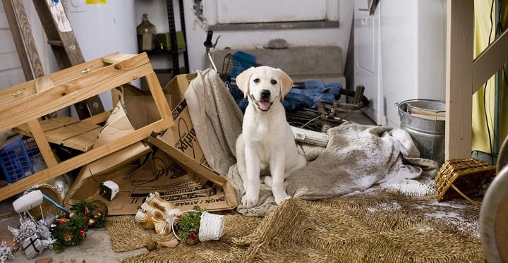 evitar perros muerdan