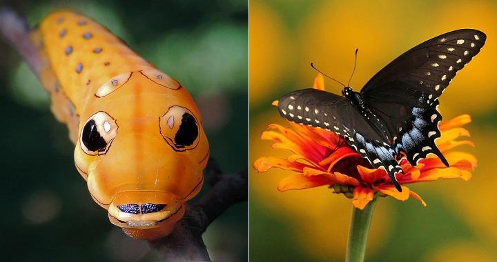 fotos orugas mariposas