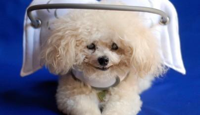 Aureola para perros ciegos1