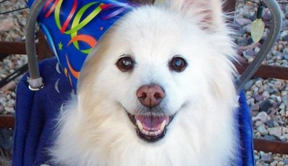 Aureola para perros ciegos13