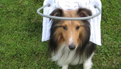 Aureola para perros ciegos15