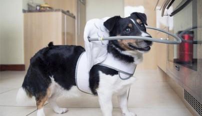 Aureola para perros ciegos2