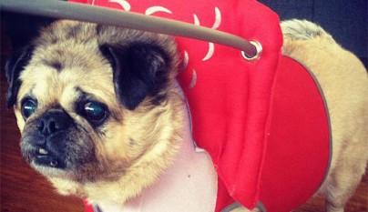 Aureola para perros ciegos6