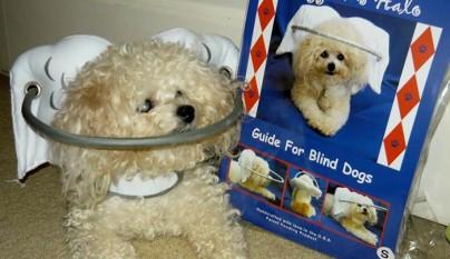 Aureola para perros ciegos7