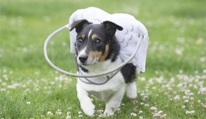 Aureola para perros ciegos8