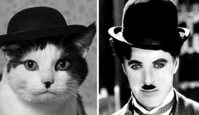 Gato Chaplin