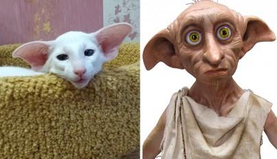 Gato Dobbie