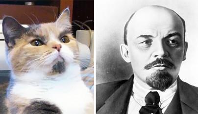 Gato Lenin