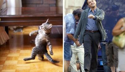 Gato Leonardo di Caprio