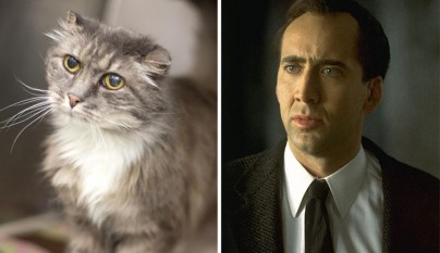 Gato Nicolas Cage