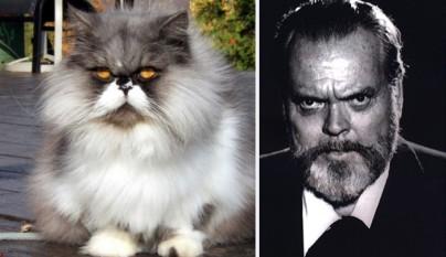 Gato Orson Welles