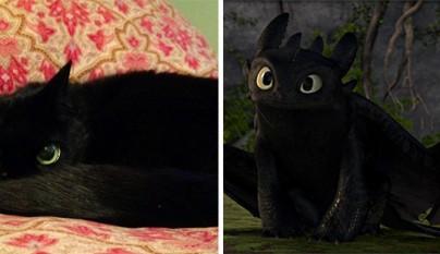 Gato Toothless